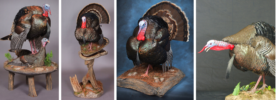 Learn to taxidermy
